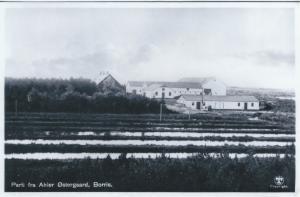 B31: Ahler Østergaard set fra øst (ca. 1920)